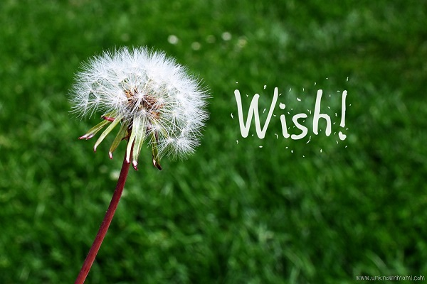 cấu trúc wish
